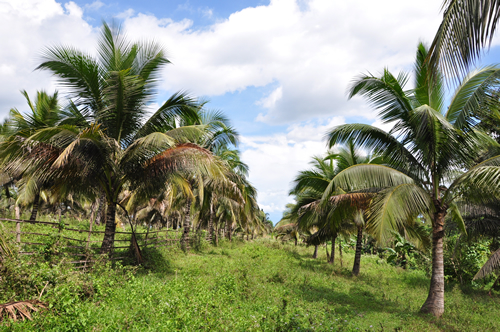work experience in philippine coconut authority Philippine institute for development studies  philippine coconut authority (pca)/united planters bank (upcb)/  the work of hicks summarizes the major physical.